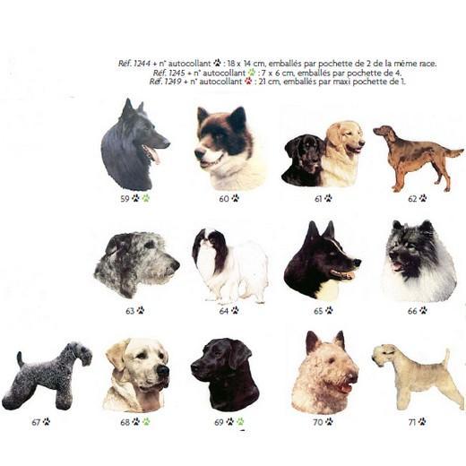 chenil chien 71