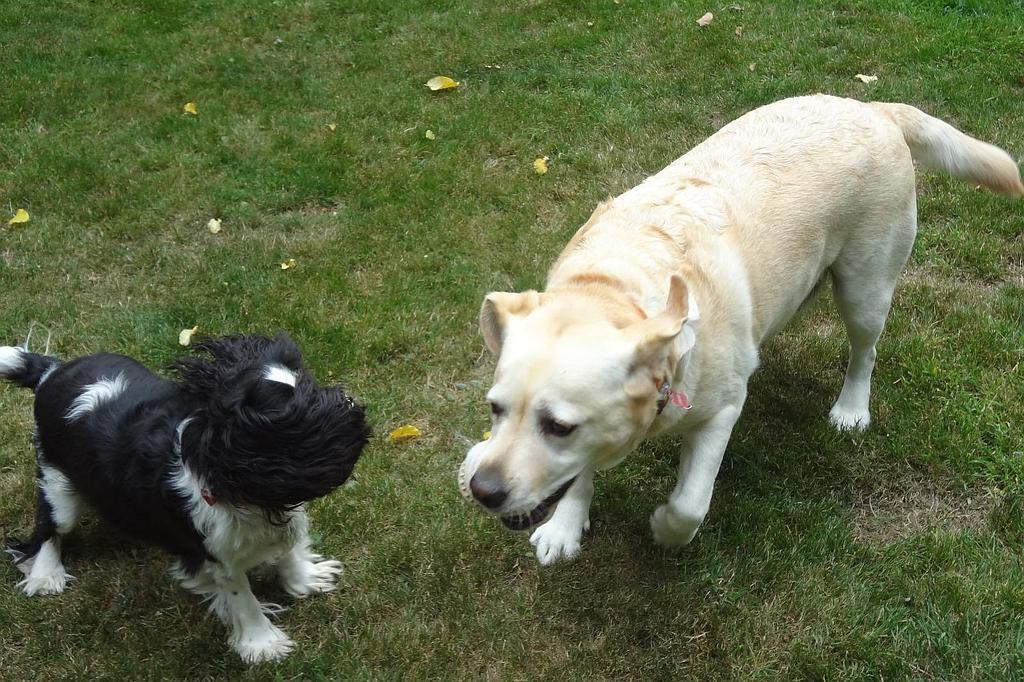 chenil chien amiens