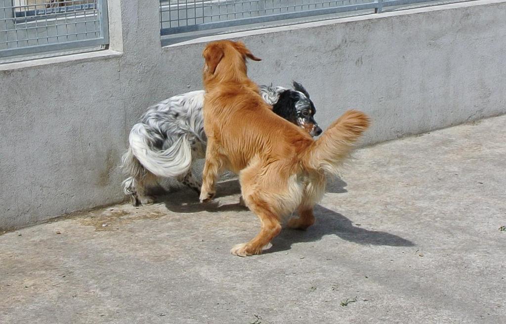 chenil chien cestas