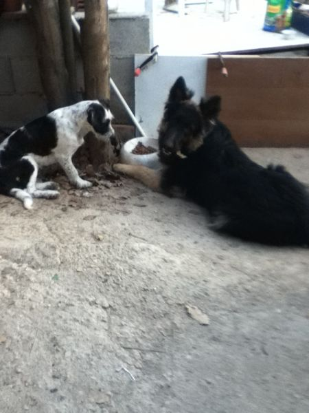 chenil chien draguignan