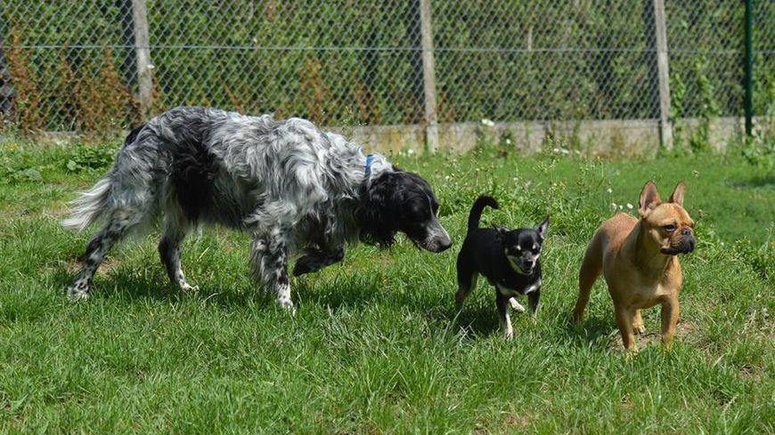 chenil chien indre et loire