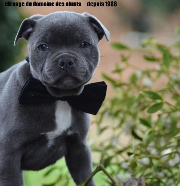 chenil chien orsay