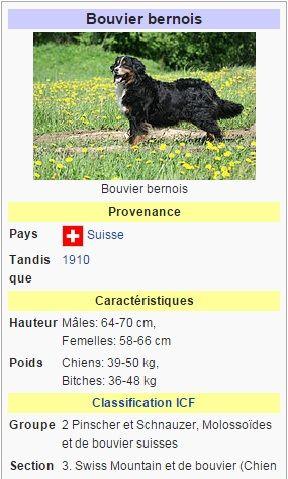chenil chien suisse