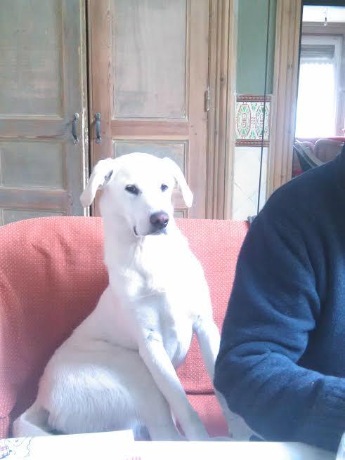 chenil chien valenciennes