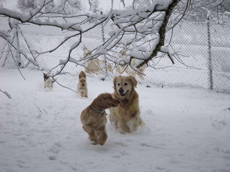 chenil chien vaud