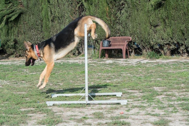 garde chien 06