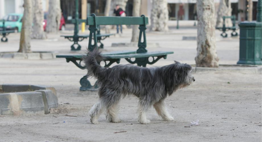 garde chien 08