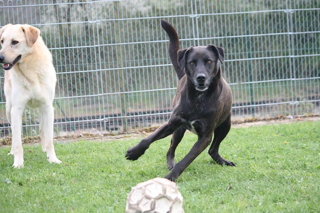 garde chien 28500