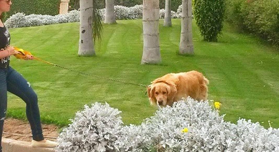 garde chien angers