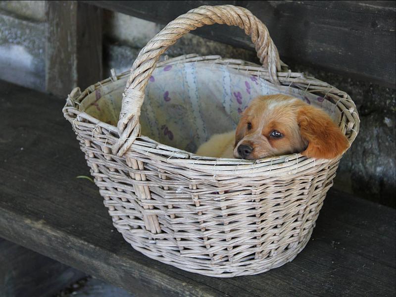 garde chien apt