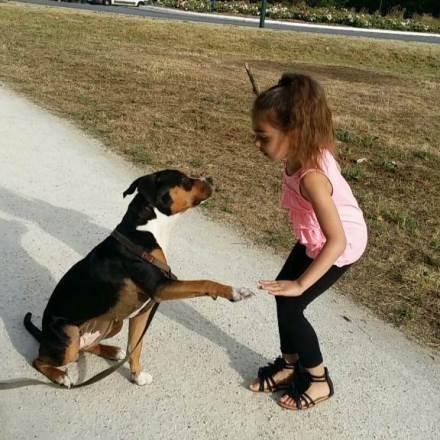garde chien chelles