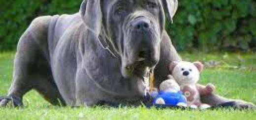 garde chien difficile