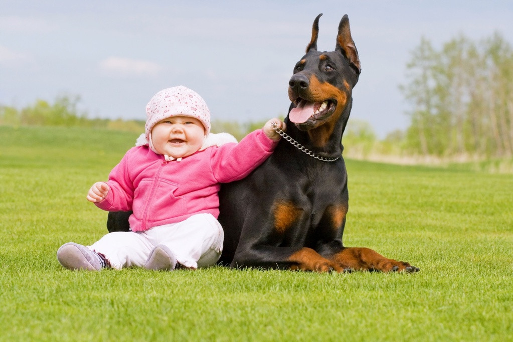 garde chien dinan