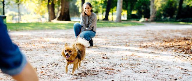 garde chien divorce