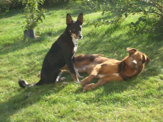 garde chien elven
