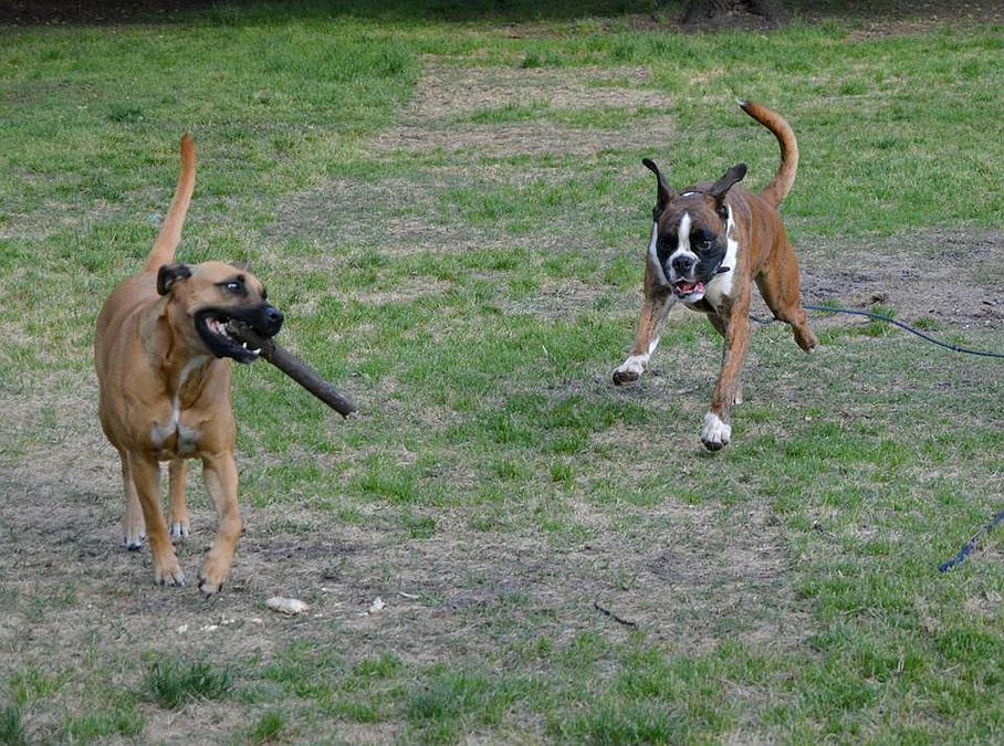 garde chien en gironde