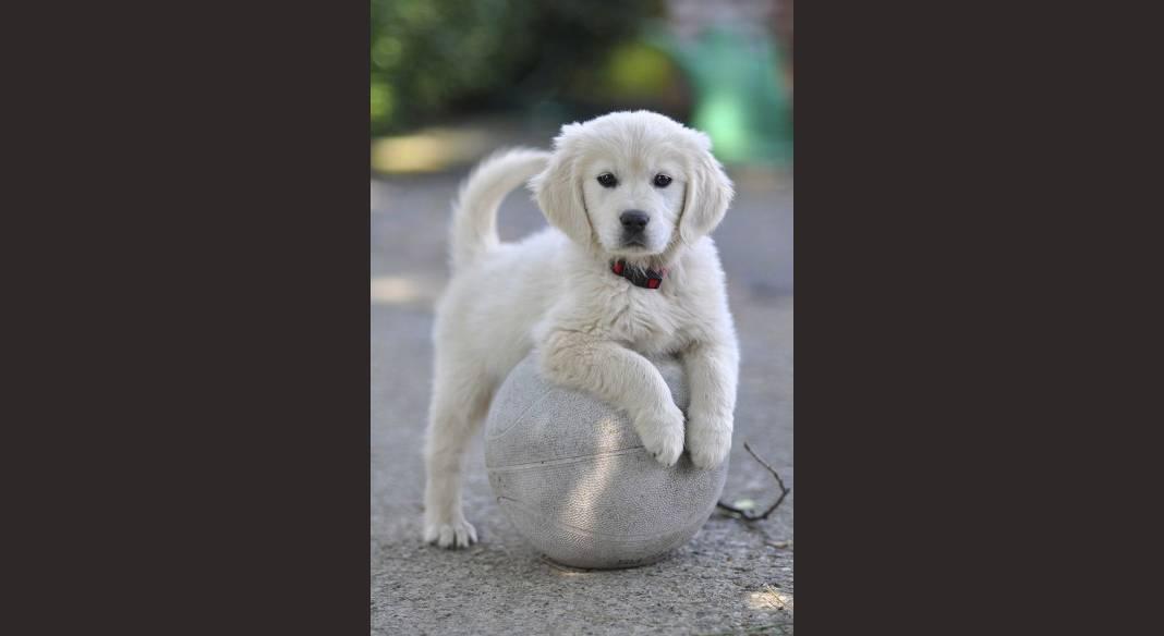 garde chien frontignan