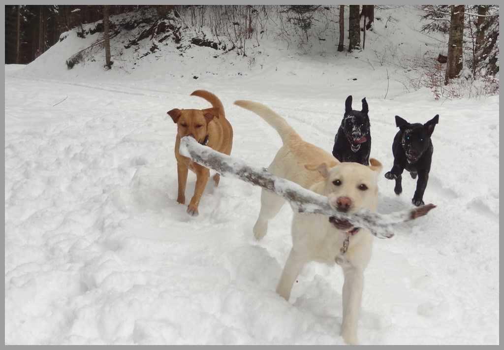 garde chien gard