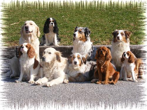 garde chien gex
