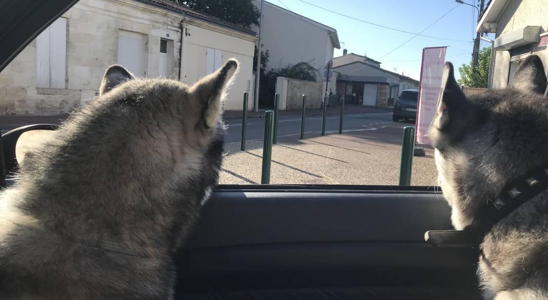 garde chien gironde