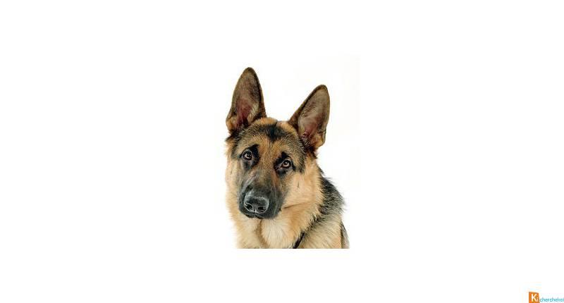 garde chien gratuite
