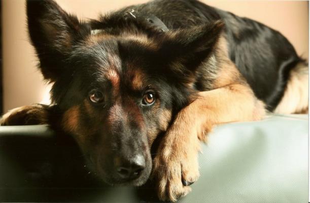 garde chien indre et loire