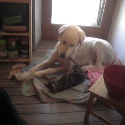 garde chien issoire