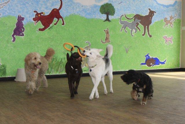 garde chien ittenheim