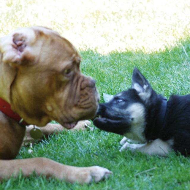 garde chien kingersheim