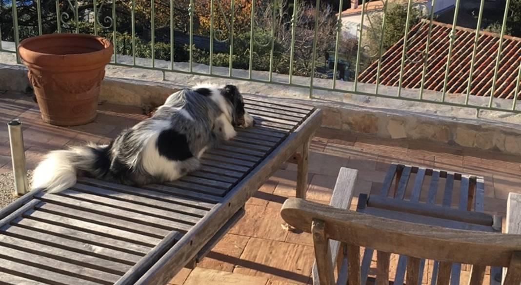 garde chien la turbie
