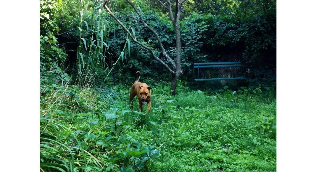 garde chien marseille 13012