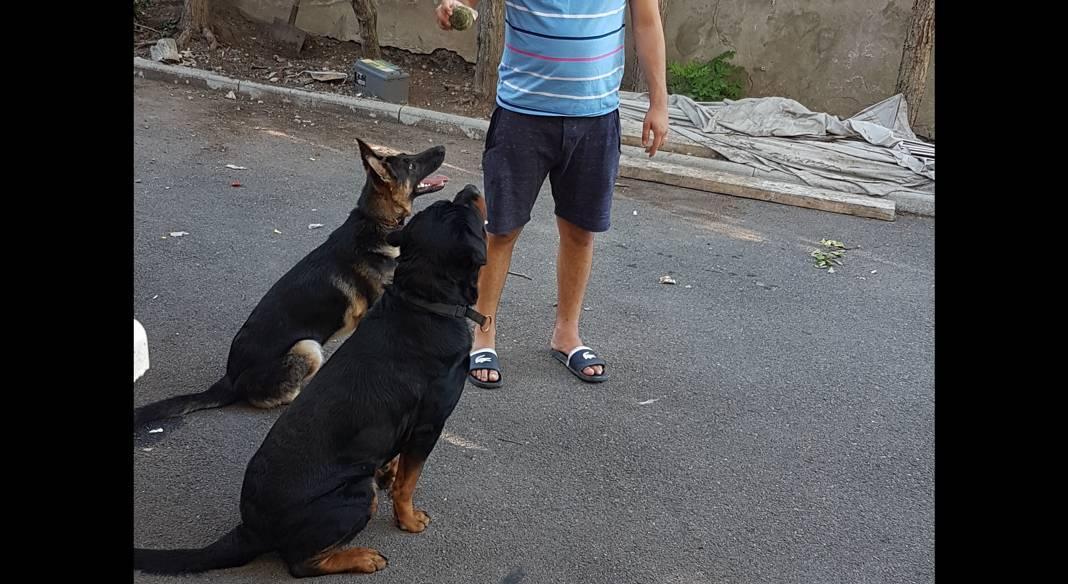garde chien meribel