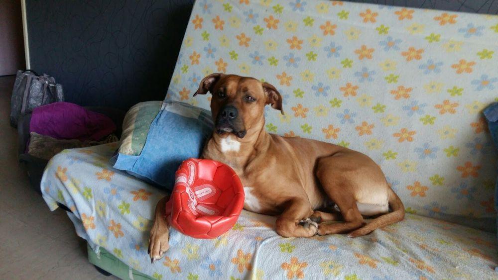 garde chien montpellier