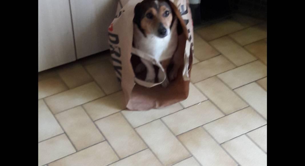 garde chien nievre
