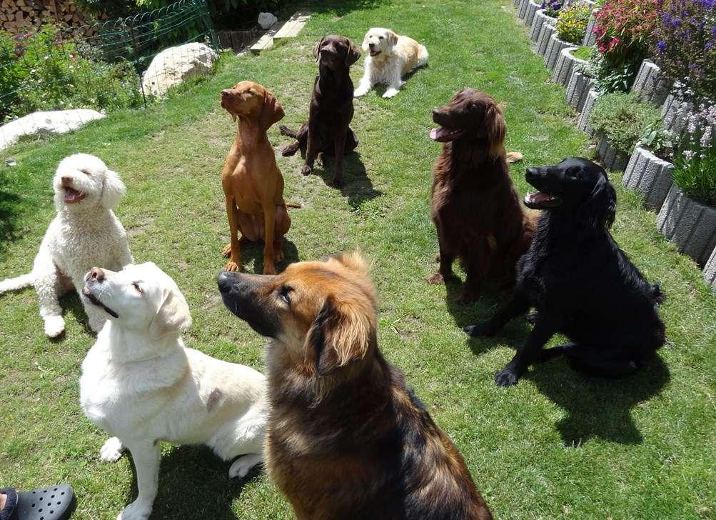 garde chien nyon