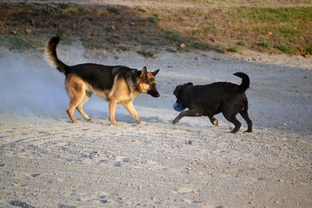 garde chien ondres