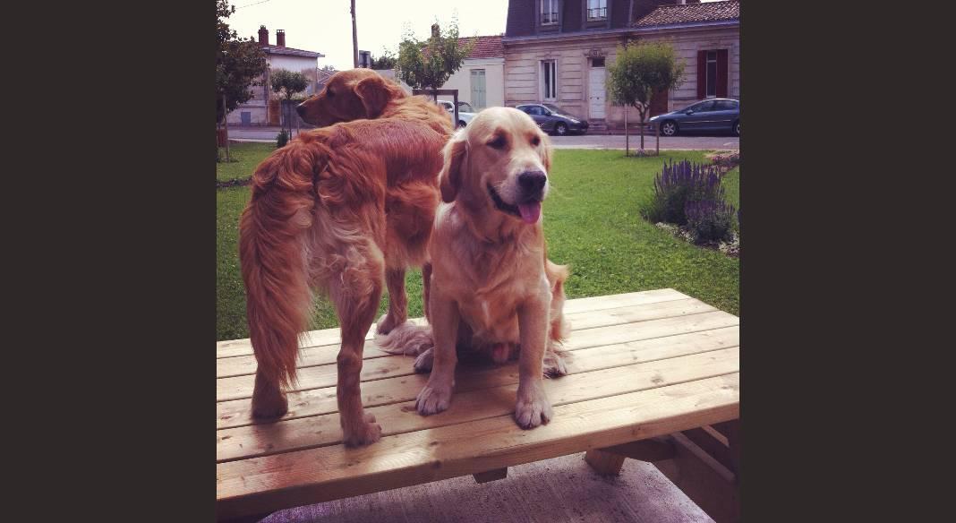 garde chien pessac