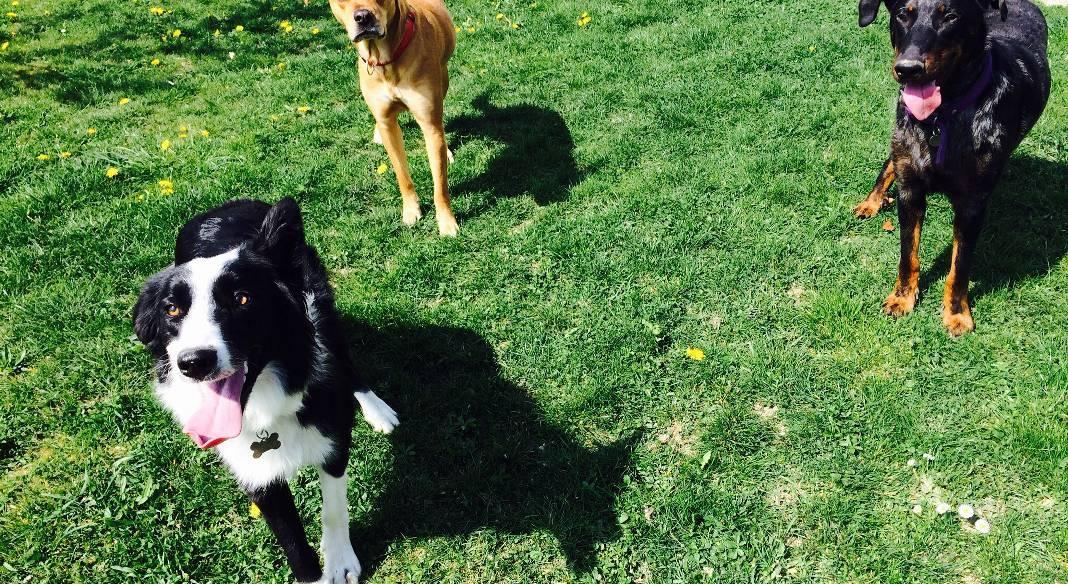 garde chien reims