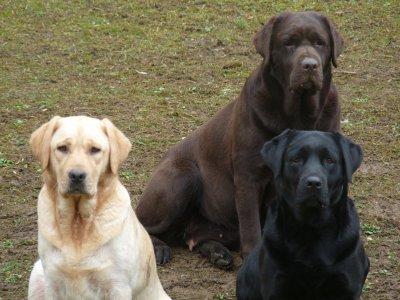 garde chien rhode saint genese