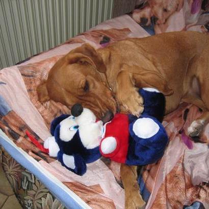 garde chien roquebrune sur argens