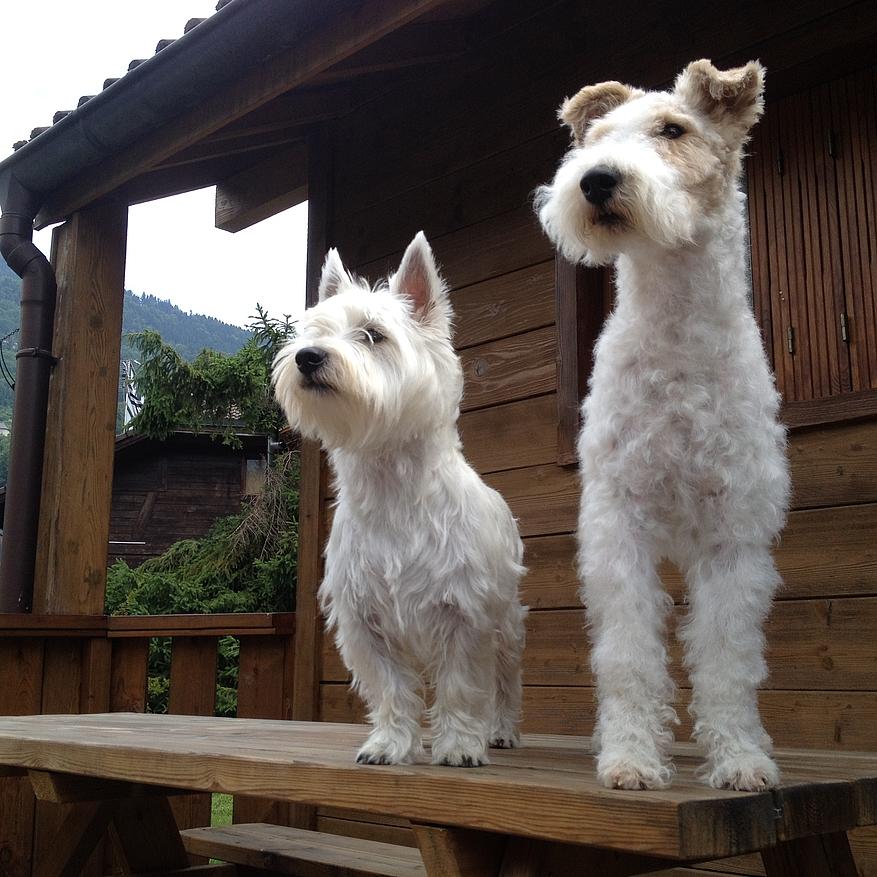 garde chien samoens