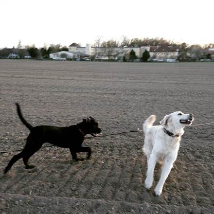 garde chien strasbourg