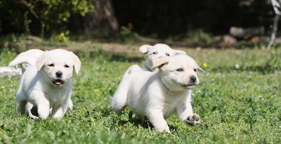 garde chien wambrechies