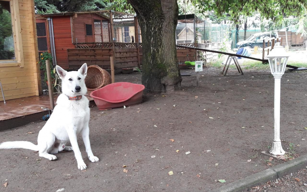 garde chien wintershouse