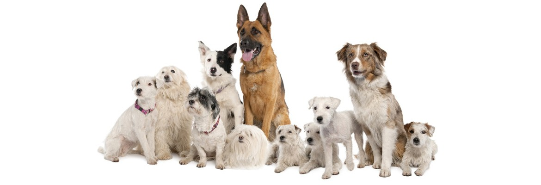 garde chien yffiniac