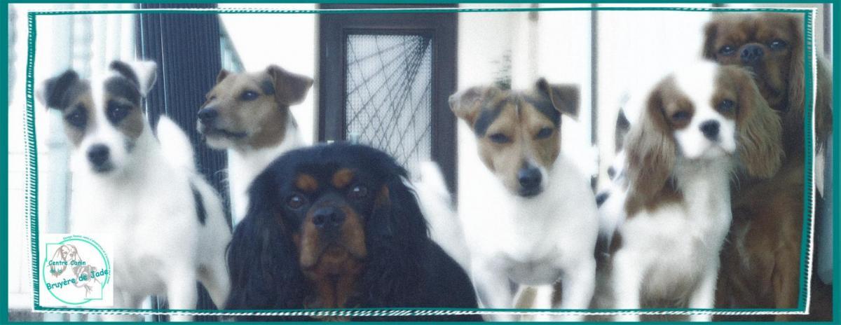 pension chien 44600