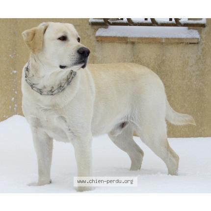 pension chien 50800