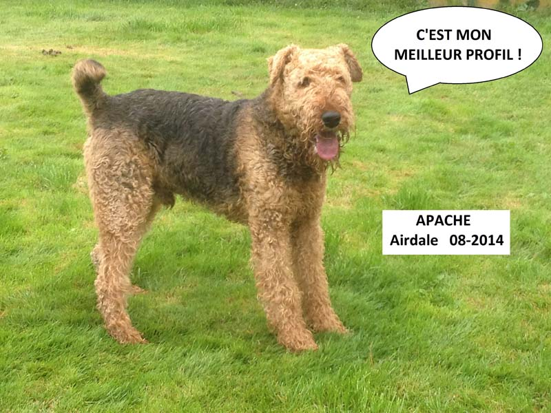 pension chien 76000