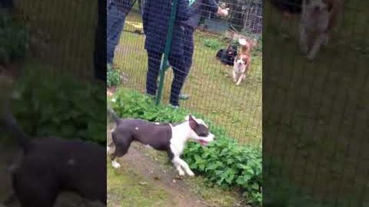 pension chien 78 jorel oinville-sur-montcient