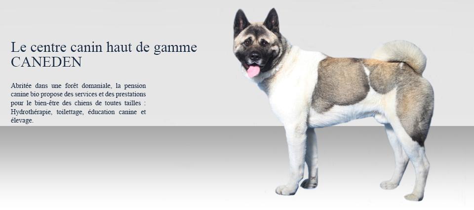 pension chien 95450